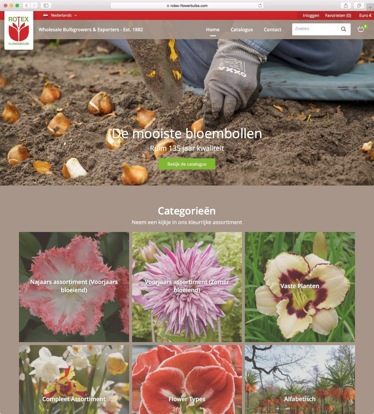 Rotex Flowerbulbs